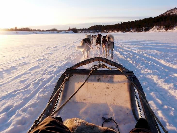 chien traineau megeve alpes